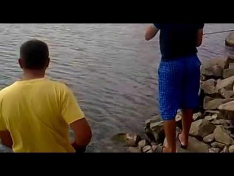 рыбалка на толстолобика в ставропольском крае