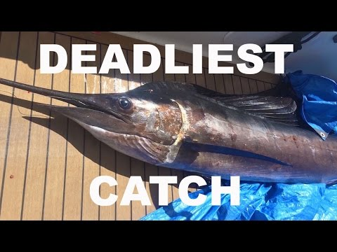 THE DEADLIEST CATCH: Crossing the Caribbean Sea - Chase the Story 28