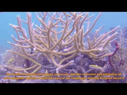¿Qué es Sea Grant Puerto Rico?