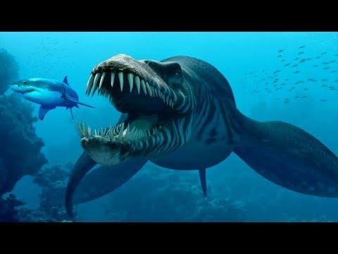 5 creature terrificanti che vivono nella Fossa delle Marianne
