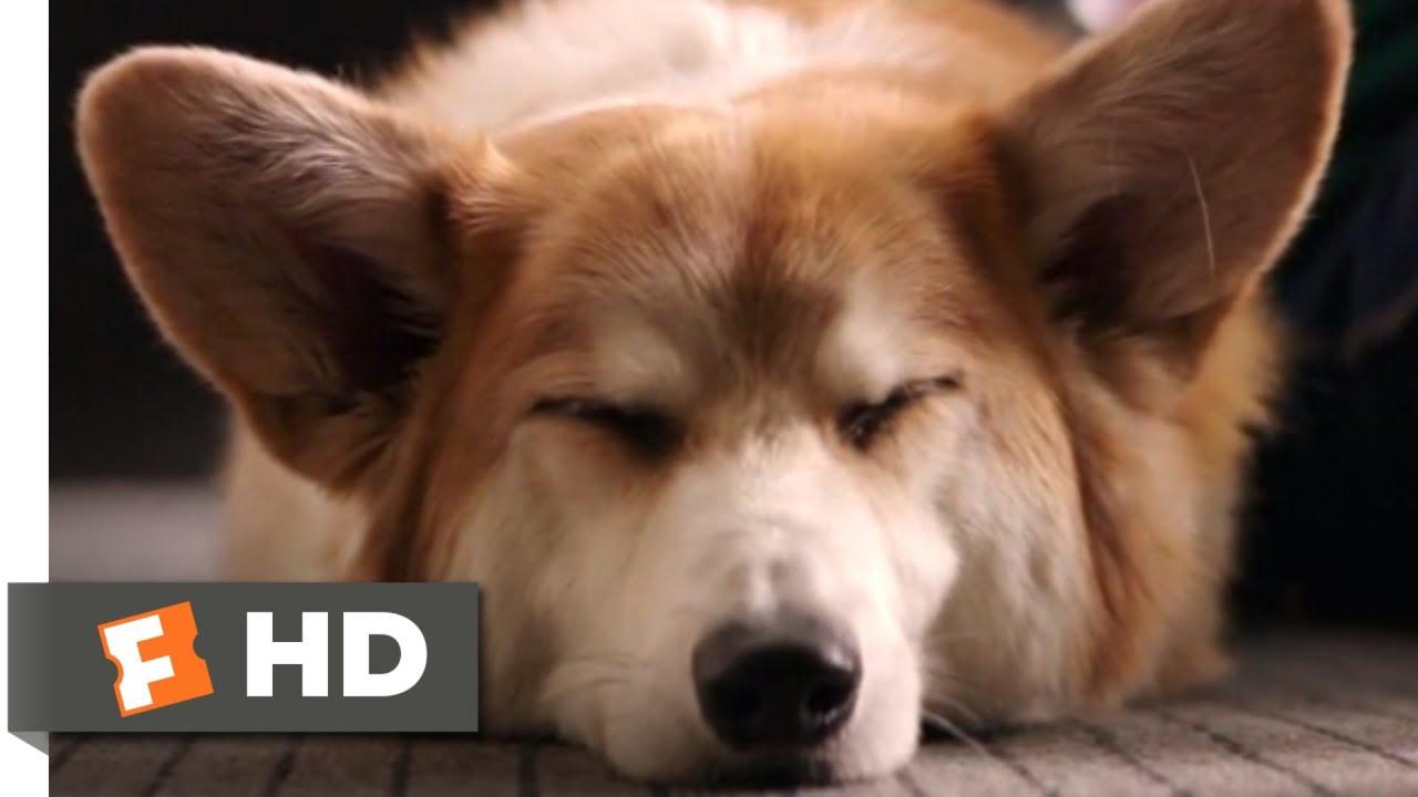 A Dog S Purpose Bailey Bailey Bailey
