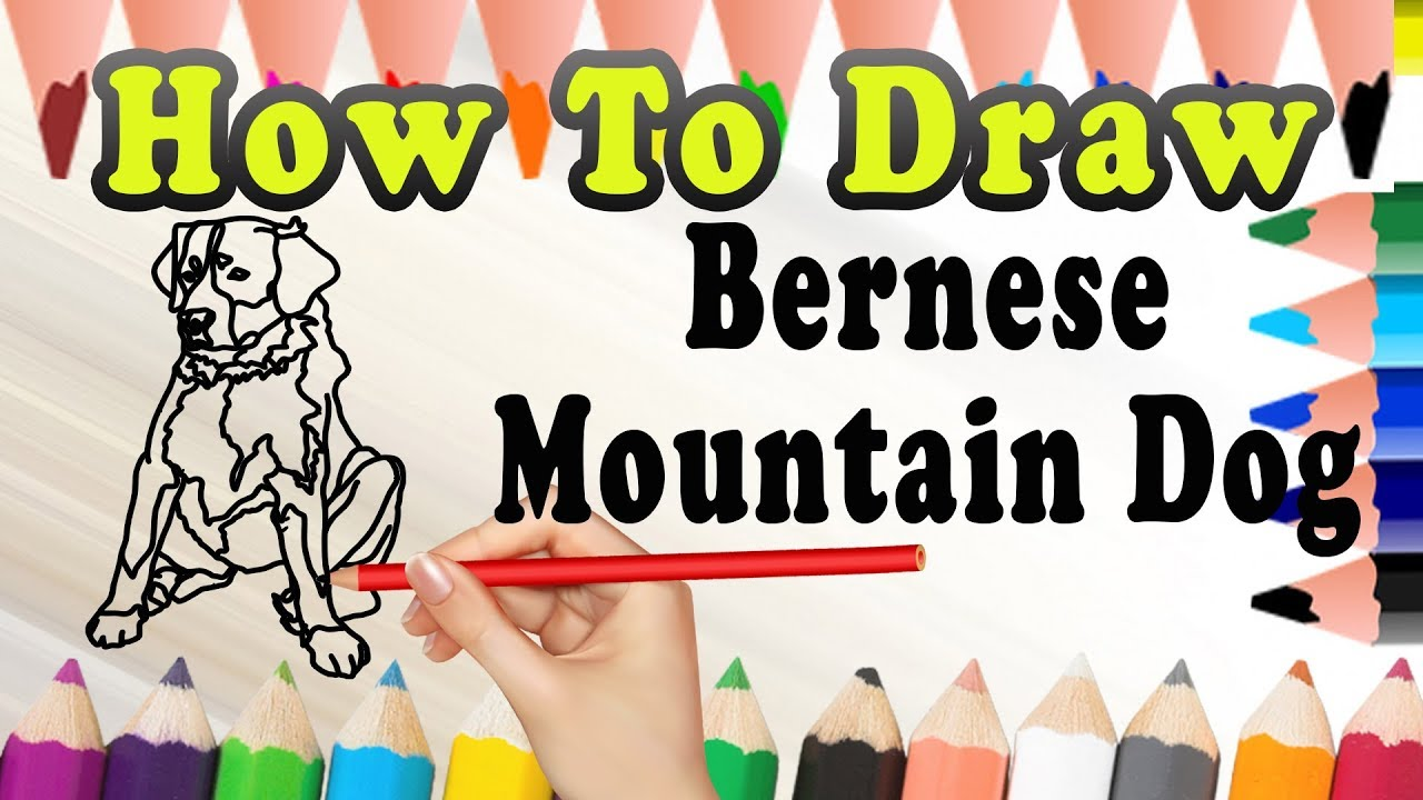 How To Draw A Bernese Mountain Dog Draw Easy For Kids