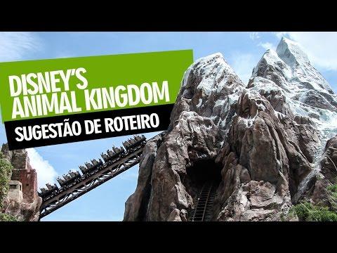 Animal Kingdom - Sugestão de Roteiro
