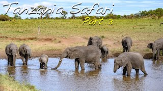 Tanzania Safari Final Video