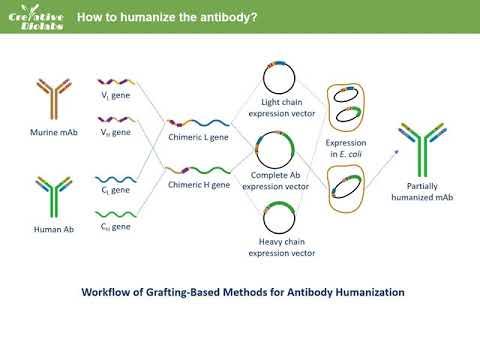 Antibody Humanization Service - Creative Biolabs (Updated Version)