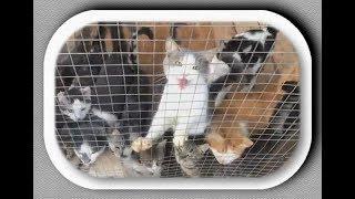 Обожжённые, но живые.  Кошки Лохматой Души. Burnt but Alive. Shaggy Soul Cats