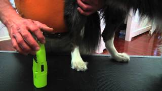 Grooming: How to trim dogs nails