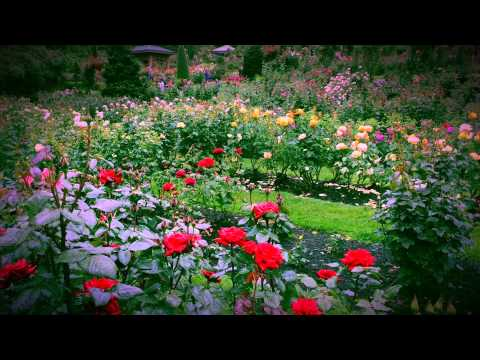 International rose test garden portland oregon youtube - International rose test garden portland ...
