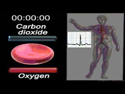 Was ist der Hämoglobinspiegel Hb-Bluttest Blutarmut - YouTube