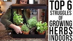 Top 6 Struggles of Growing Herbs Indoors (w/ solutions)!!!??? // Garden Answer