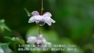先日アップした「水無月十三夜」と同じく、アルバム「野菊よ、僕は…」に...