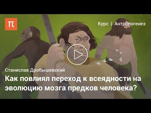 Эволюция мозга человека — Дробышевский Станислав