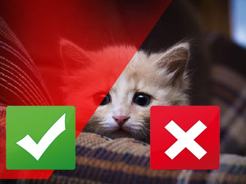 10 Signs Your Cat Might Be Stressed