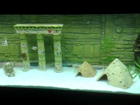 egyptian themed aquarium youtube. Black Bedroom Furniture Sets. Home Design Ideas