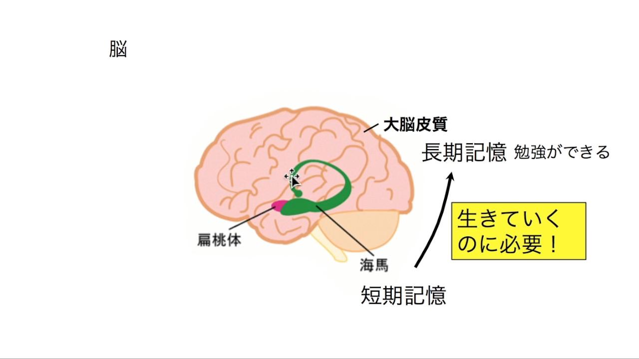 方法 良く 頭 が なる 頭が良くなる食べ物と悪くなる食べ物の違いは?受験によい食べ物を徹底調査!