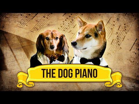 The Dog Piano!