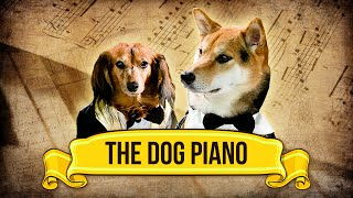 The Dog Piano!