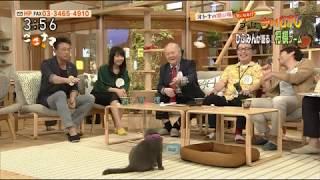 ひふみんは、ネコ語を理解し、ネコの気持ちが分かるそうだ。 ネコとの不...