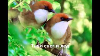 Бюро переводов Киев (Весна. Андрей Данилко)(, 2012-04-05T06:47:34.000Z)