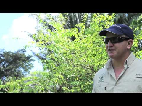 Learn about the Cayman Islands: Flora and Fauna