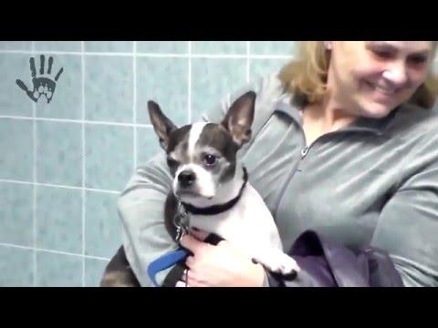 Pets Hate Veterinarian [HD]