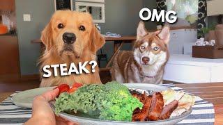 dog-reviews-food-with-husky-tucker-taste-test-17