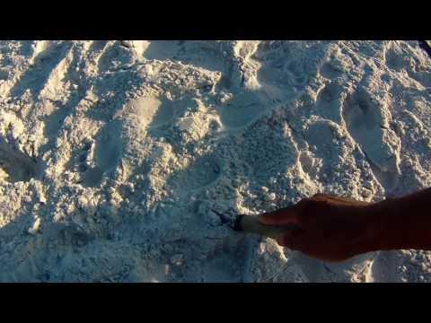 Metal Detecting in Siesta Key Florida Part 2~~~ Watch What I Find