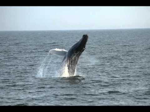 Virginia Beach Has Whales Rudee Tours Whale Watching Dec 2017