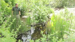 EQUISETUM - Natural BioFilter and Much More