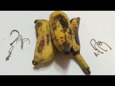 How To Hook Bananas For River Catfishing(33)الموز لطعم سمك السلور - Chuối Mồi Cá Tra
