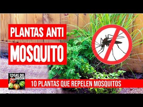ADIOS A LOS MOSQUITOS -10 MEJORES PLANTAS REPELENTES
