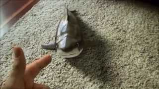 Shark toy again. REAL or NOT streaming