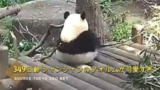 ☆ Cute Panda ☆ #24 シャンシャンのフォルムに癒される♡