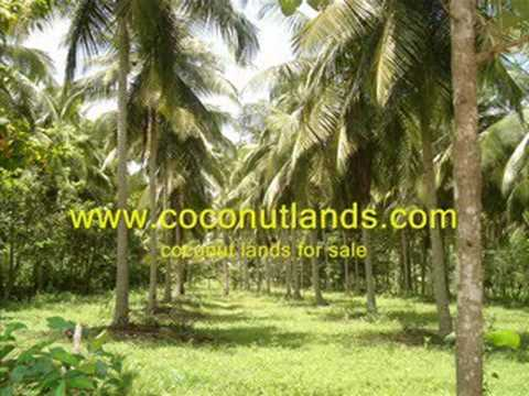 coconut lands for sale in sri lanka