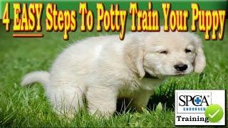 **** How To Potty Train a Puppy ♥♥ 4 EASY Steps ♥♥ Housebreak a Dog +++