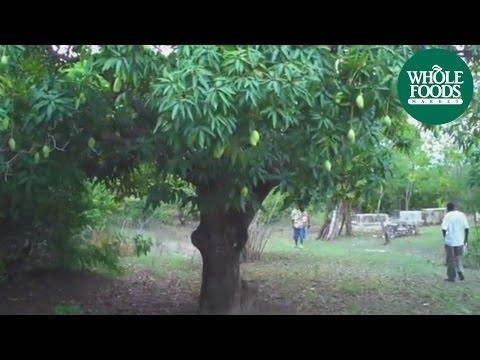 Haitian Mangoes   Produce   Whole Foods Market