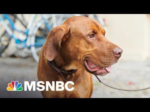Texas Gov. Abbott Blasted For Vetoing Bill Punishing Dog Abuse