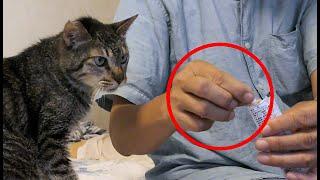 【保護猫】ちょっと口の具合が悪そうで心配な団子隊員だがそんな状況でも悪知恵に長けている。【魚くれくれ野良猫製作委員会】