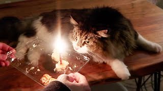 Throwing my cat a BIRTHDAY PARTY!!