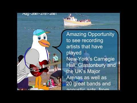 Watch Steven Seagull