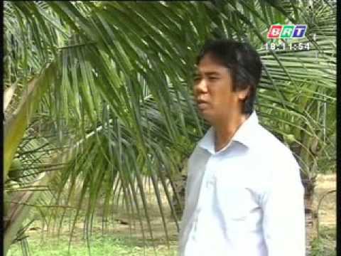 khuyen nong 24 7 2012 Chăm sóc và phòng trừ sâu bệnh cho cây dừa xiêm dứa
