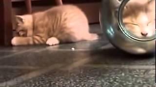 Киськи  в банке. Кошки  маленькие и смешные