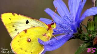 Yanni - Butterfly Dance