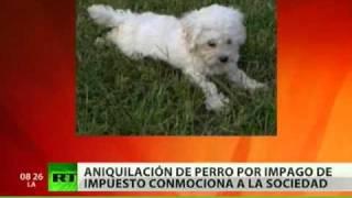 En Suiza sacrifican a un perro por el impago de un impuesto de 40 euros