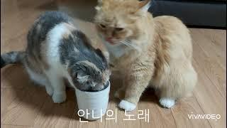 물먹는 안나♡코코