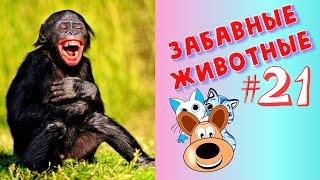 Приколы с Животными #21 / Смешные Животные / Приколы 2020 / Приколы про Животных / Лучшие Приколы