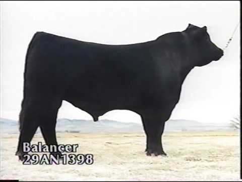 ABS Beef Sires 1994