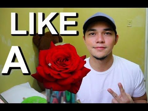Like A Rose Cover
