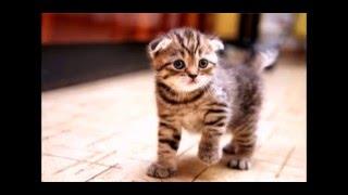 Милые котята и щенки!!!