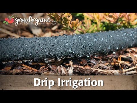 Using Drip Irrigation to Save Water in Your Garden